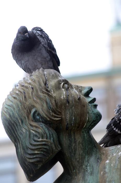 photoblog image Stadsduva - City Pigeon (Columba livia) 7