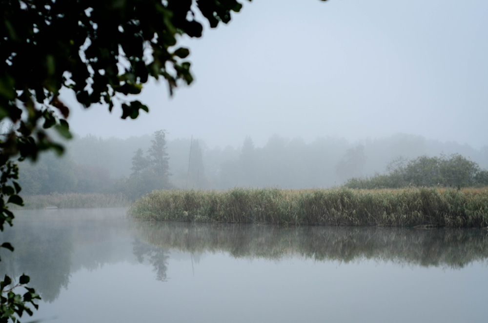photoblog image Disig morgon - Misty morning