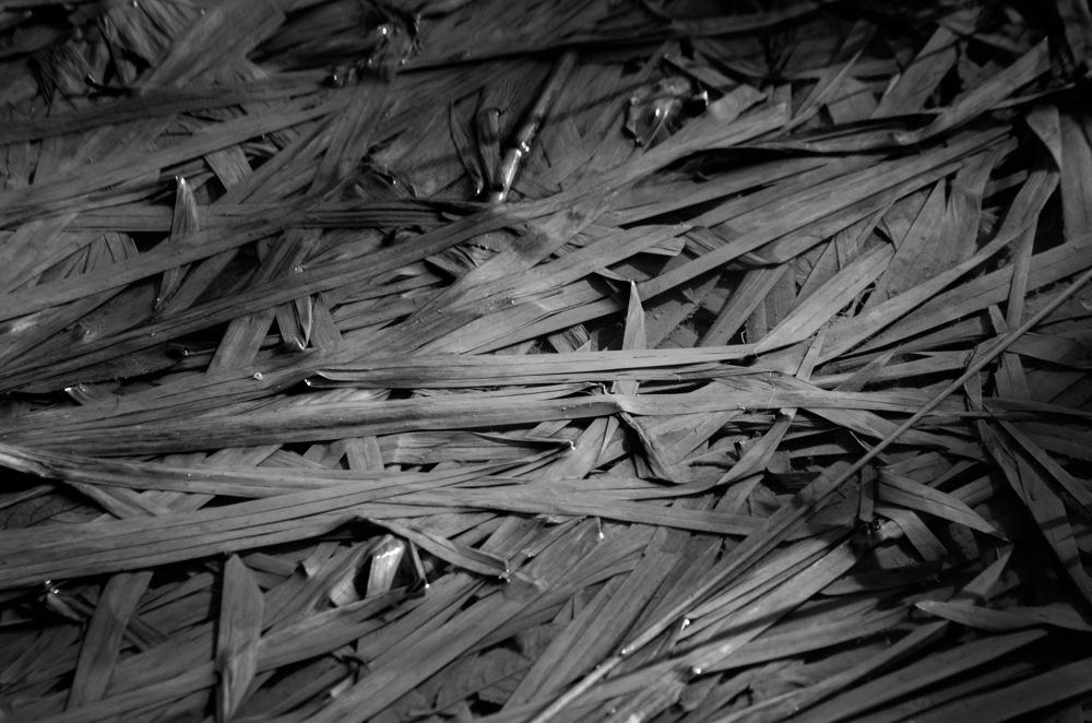photoblog image Vass - Reeds