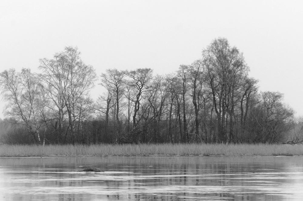 photoblog image Träd - Trees