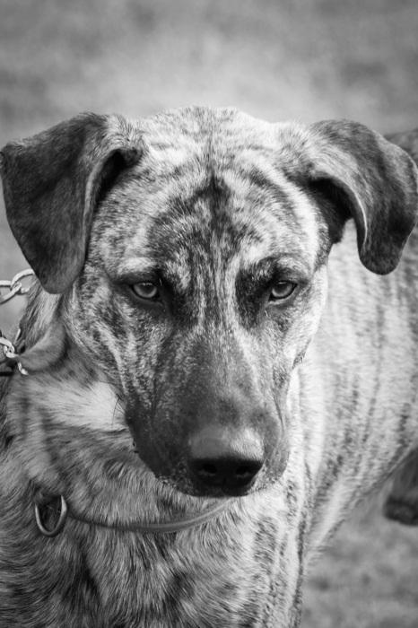 photoblog image Hund - Dog