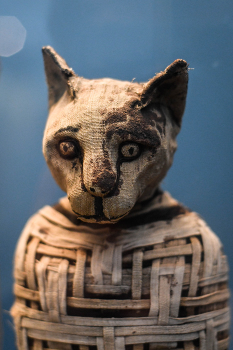 photoblog image Kattmumie - Mummy of a cat