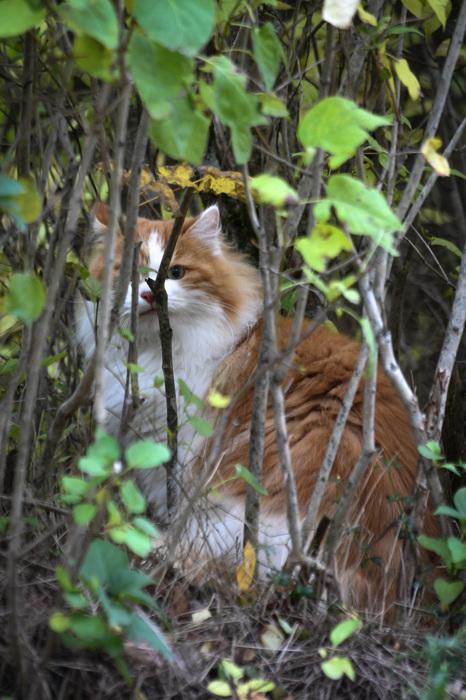 photoblog image Katt - Cat